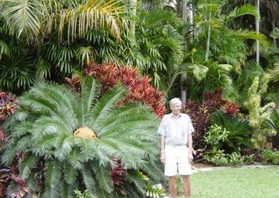 2003-cycad-and-gordon-palm-fascinations