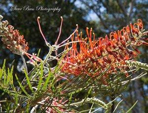 Maroochy Botanical Gardens