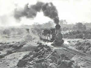 buderim-train